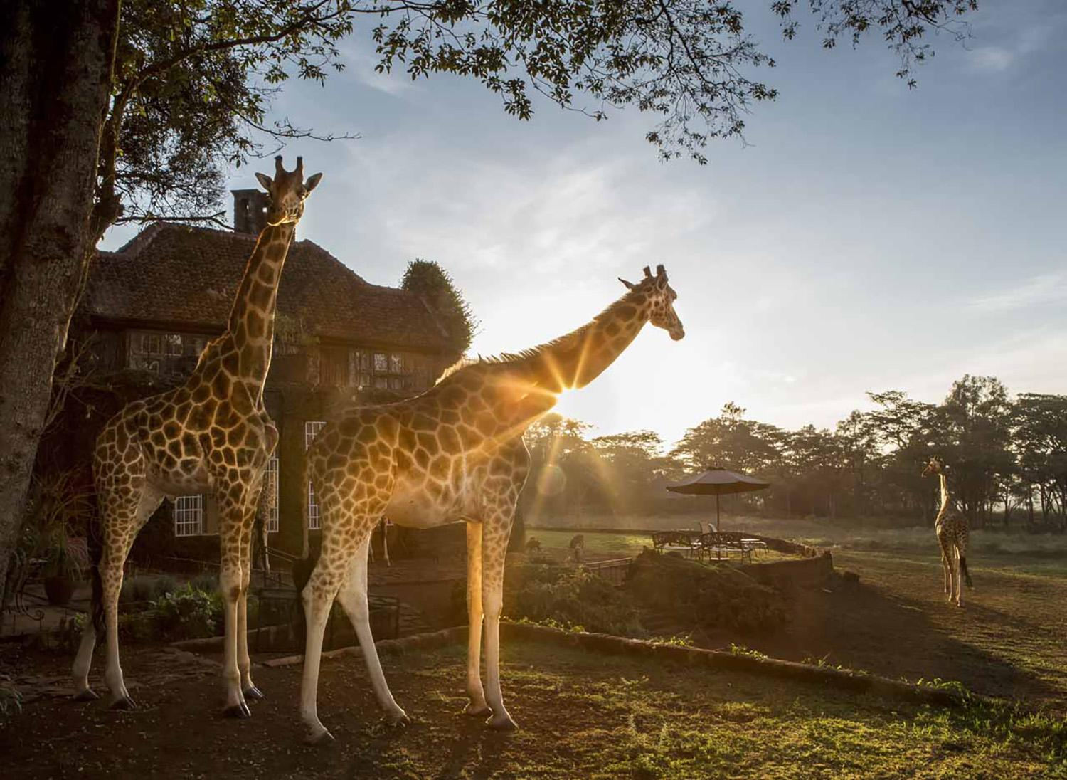 EXCLUSIVE EXOTIC HOTELS & RESORTS YOU MUST ADD TO YOUR BUCKLE LIST - The Safari Collection